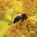 Flowerybee