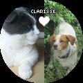 Clarisse ღ