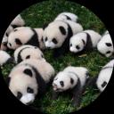 Icône Panda Wars 🐼